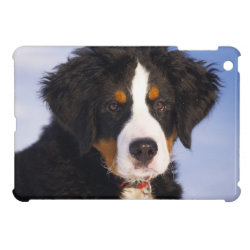 Case Savvy iPad Mini Glossy Finish Case with Bernese Mountain Dog Phone Cases design