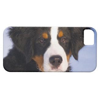Bernese Mountain Dog - Cute Puppy Photo iPhone SE/5/5s Case