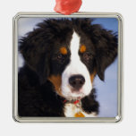Bernese Mountain Dog - Cute Puppy Photo Christmas Tree Ornaments
