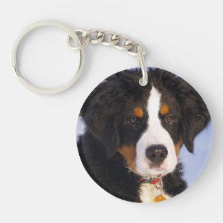Bernese Mountain Dog - Cute Puppy Photo Single-Sided Round Acrylic Keychain