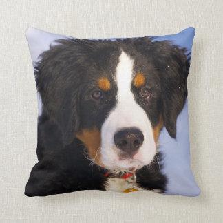 Bernese Mountain Dog - Cute Puppy Photo Throw Pillow