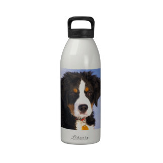 Bernese Mountain Dog - Cute Puppy Photo Reusable Water Bottle