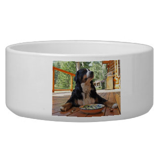 Bernese Mountain Dog, Everyone's Best Friend Bowl