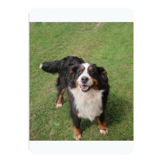 bernese mountain dog full.png card