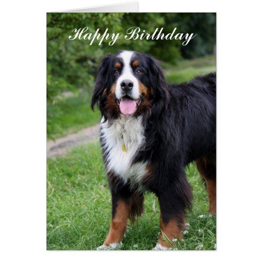 Bernese Mountain dog happy birthday greeting card | Zazzle