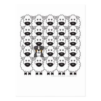 Bernese Mountain Dog in the Sheep Postcard