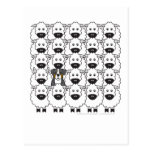 Bernese Mountain Dog in the Sheep Postcards