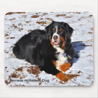 Bernese Mountain Dog in the Snow Mouse Pad