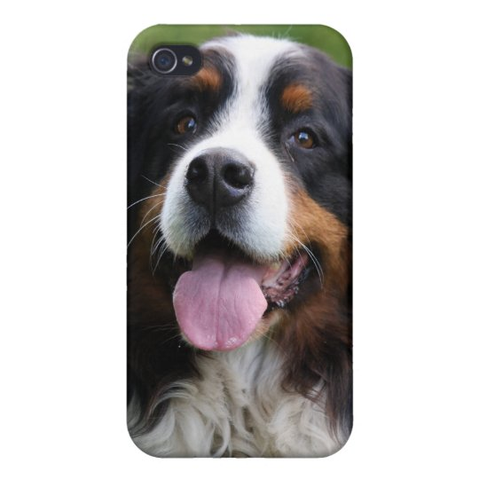 Bernese Mountain dog iphone 4 case, gift idea iPhone 4 Cover