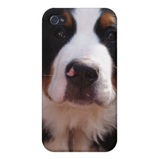 Bernese Mountain Dog iPhone Case iPhone 4/4S Cases
