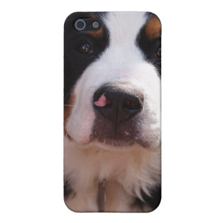 Bernese Mountain Dog iPhone Case Covers For iPhone 5