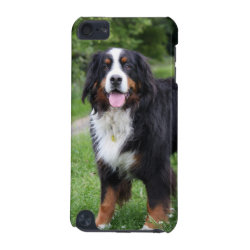 Case-Mate Barely There 5th Generation iPod Touch Case with Bernese Mountain Dog Phone Cases design