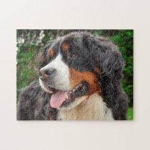 Bernese Mountain Dog. Jigsaw Puzzle