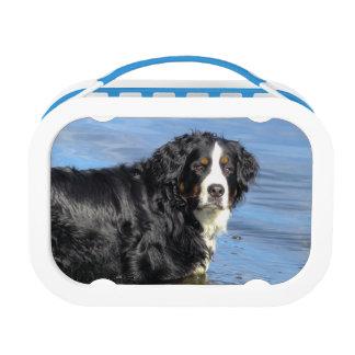 Bernese Mountain Dog lunch box