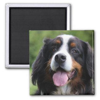 Bernese Mountain dog magnet, gift idea
