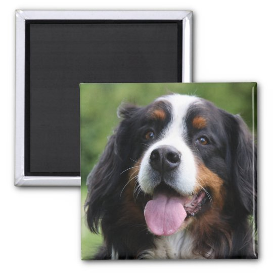 Bernese Mountain dog magnet, gift idea Magnet