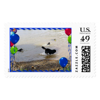 Bernese Mountain Dog Party Stamp