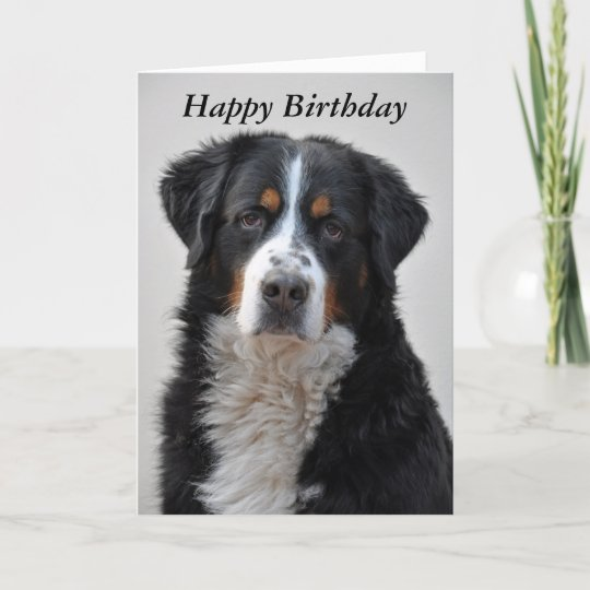 Bernese Mountain Dog Photo Happy Birthday Card