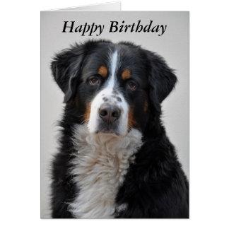 Bernese Mountain dog photo happy birthday card