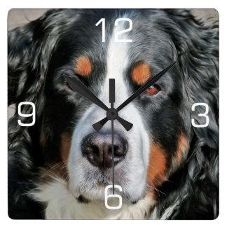 Bernese Mountain Dog Photo Image Clocks
