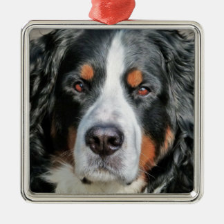 Bernese Mountain Dog Photo Image Metal Ornament