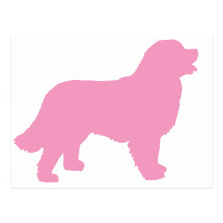 Bernese Mountain Dog (pink silhouette) Postcard