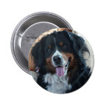 Bernese Mountain Dog Pins