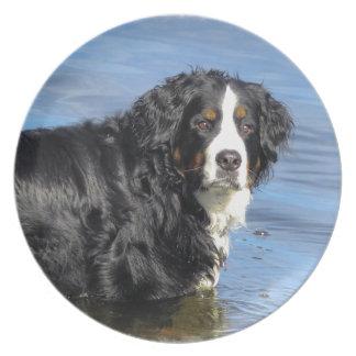 Bernese Mountain Dog Plate