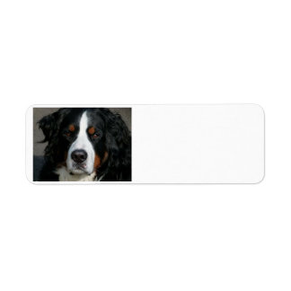 bernese mountain dog.png label