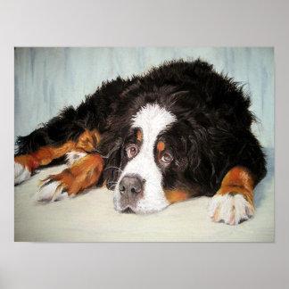 Bernese Mountain Dog Portrait Poster Print