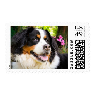 Bernese Mountain Dog Postage Stamps