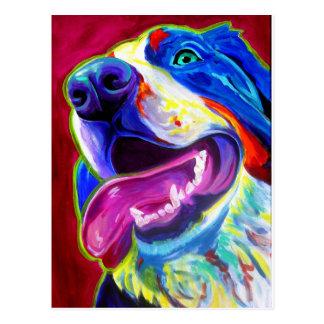 Bernese Mountain Dog Post Card