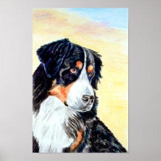 Bernese Mountain Dog Poster Print