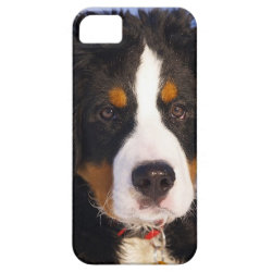 Case-Mate Vibe iPhone 5 Case with Bernese Mountain Dog Phone Cases design