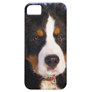 Bernese Mountain Dog Pup iPhone 5 case