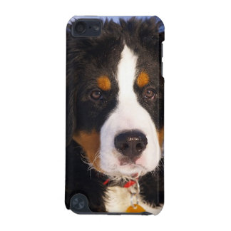 Bernese Mountain Dog Pup iPod Touch 5g case