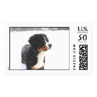 Bernese Mountain Dog Pup Stamp