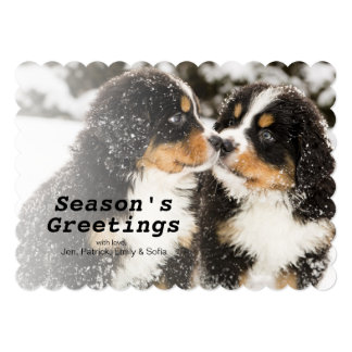 Bernese Mountain Dog Puppets Sniff Each Other Card