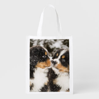 Bernese Mountain Dog Puppets Sniff Each Other Grocery Bag