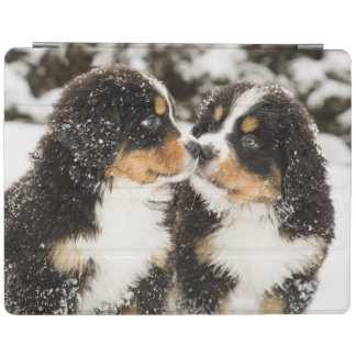 Bernese Mountain Dog Puppets Sniff Each Other iPad Smart Cover