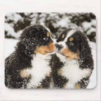 Bernese Mountain Dog Puppets Sniff Each Other Mouse Pad