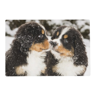 Bernese Mountain Dog Puppets Sniff Each Other Placemat