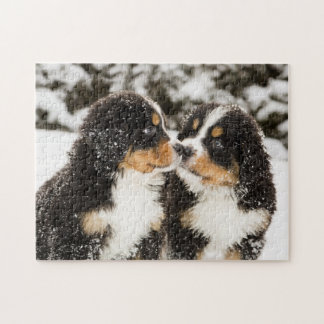 Bernese Mountain Dog Puppets Sniff Each Other Jigsaw Puzzles