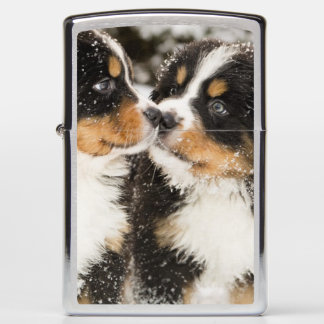 Bernese Mountain Dog Puppets Sniff Each Other Zippo Lighter