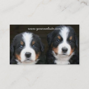 Bernese Mountain dog puppies business card