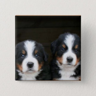 Bernese mountain dog puppies button