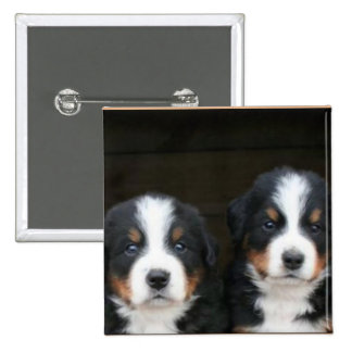 Bernese mountain dog puppies button