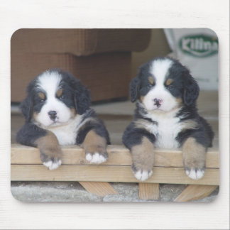 Bernese Mountain dog puppies mouse mat Mouse Pad