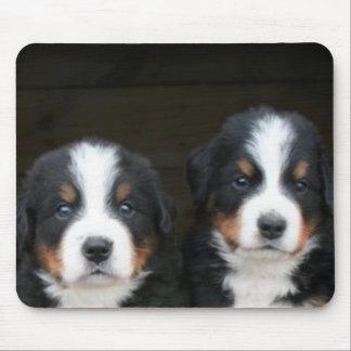 Bernese mountain dog puppies mousepad