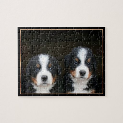 Bernese mountain dog  puppies puzzle